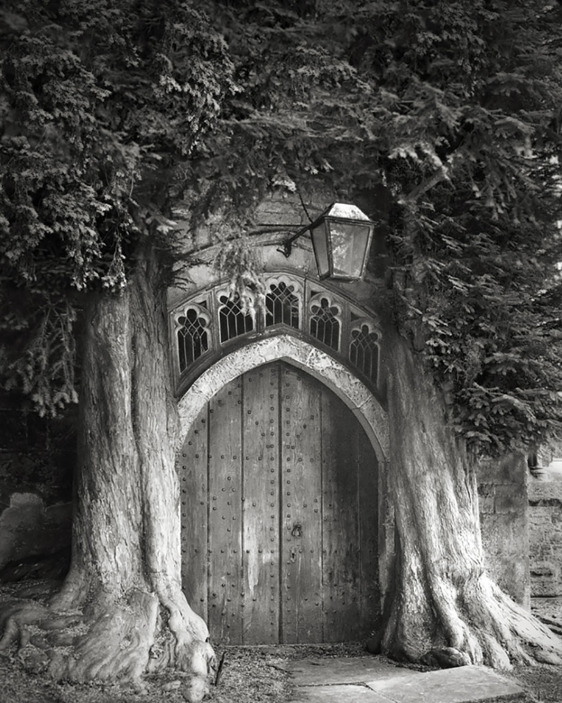 ancient-trees-beth-moon-6