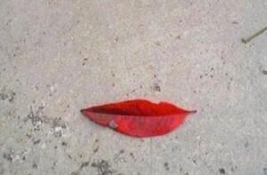 zleap lip
